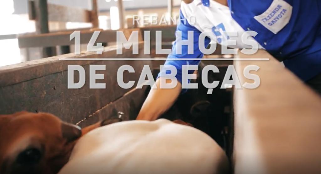 Rondônia 20 Anos Sem Aftosa